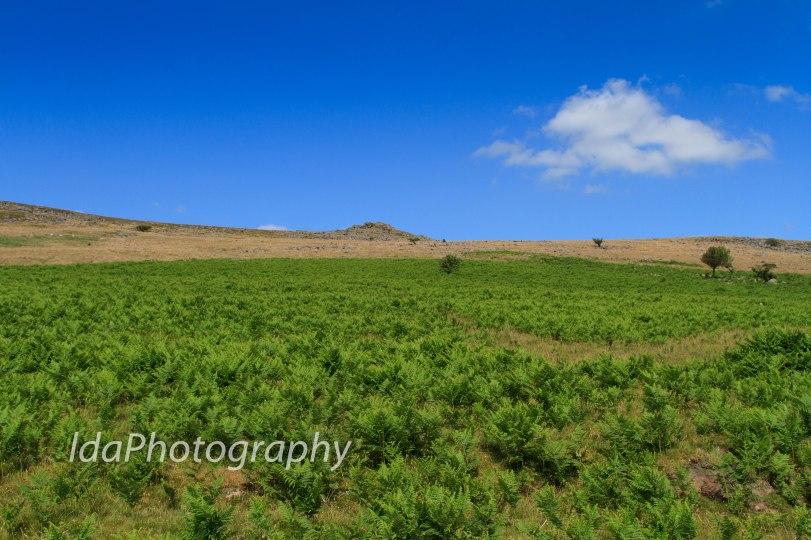 Dartmoor-2218