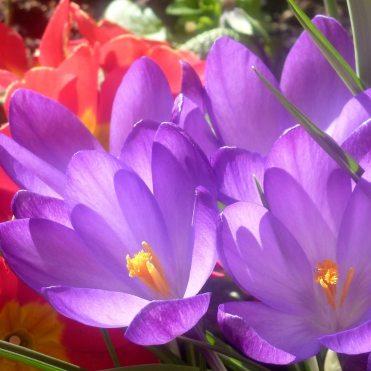 Flower's In Paul's Garden Photographer: Paul Hurst