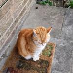 One Year on - Cafrey the official LDN Life cat 23