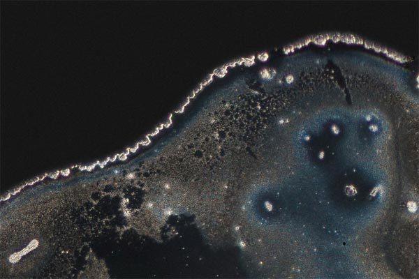 # 顯微鏡下的毒品原來這麼美:荷蘭攝影師 Maurice Mikkers 的 毒品結晶 系列作品 13