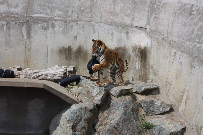 # Zoo Jeans 讓老虎、獅子當設計師:這才是真正的獸爪牛仔褲! 11