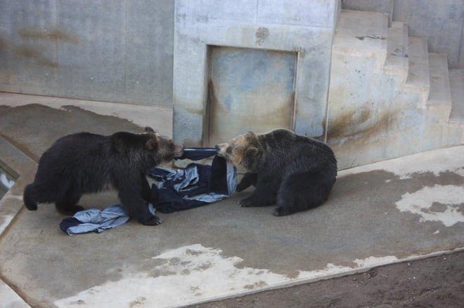 # Zoo Jeans 讓老虎、獅子當設計師:這才是真正的獸爪牛仔褲! 18