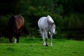DSC_0194re_horses west_022