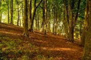 fencetrees3ldp_remake_075