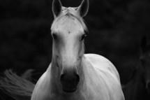 White_Horse_ldpfotoblog