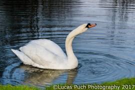 lucaspuch_marchevening_web-11
