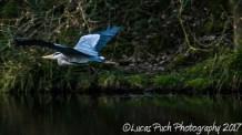 april_1_nature_canal_ldpfotoblog-6