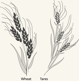 Wheat And Tares Coloring Pages Coloring Pages