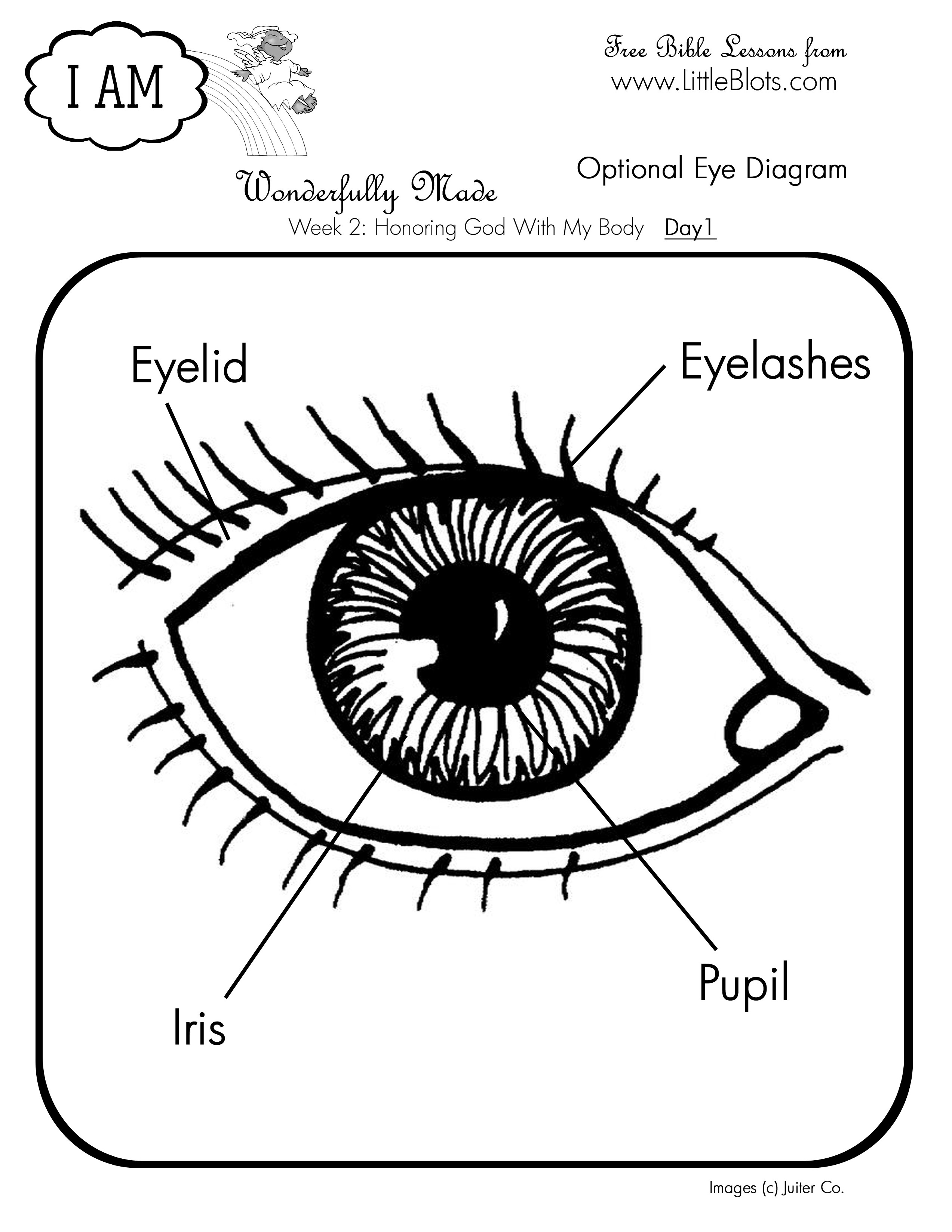 parts of the eye diagram for kids clipsal rj11 socket wiring sunbeam lds lessons in a box