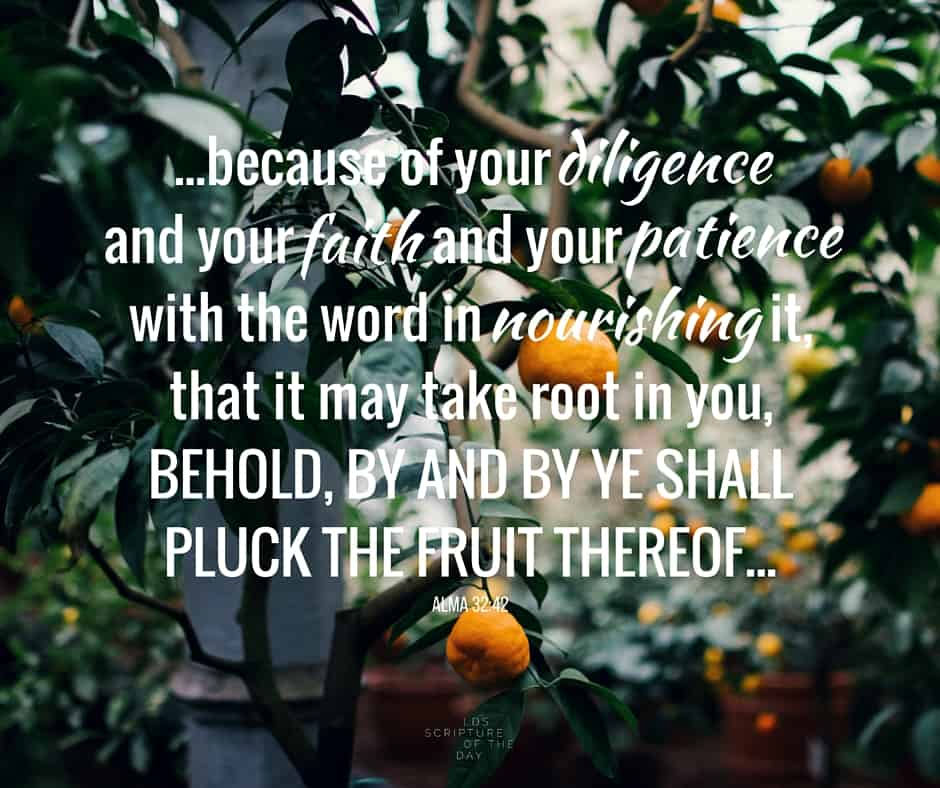 ...because of your diligence and your faith and your patience with the word in nourishing it, that it may take root in you, behold, by and by ye shall pluck the fruit thereof... Alma 32:42