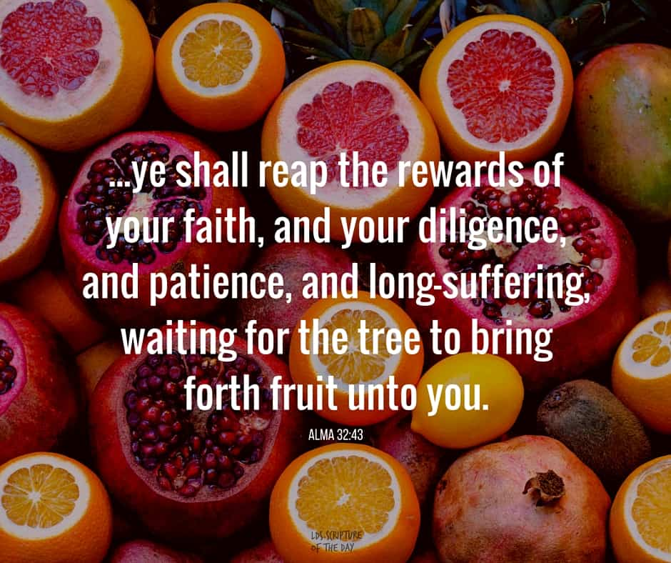 ...ye shall reap the rewards of your faith, and your diligence, and patience, and long-suffering, waiting for the tree to bring forth fruit unto you. Alma 32:43