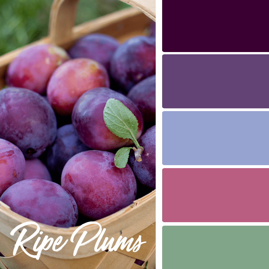 Ripe Plums - 25 Fall Wedding Colors Any Bride & Groom Will Love