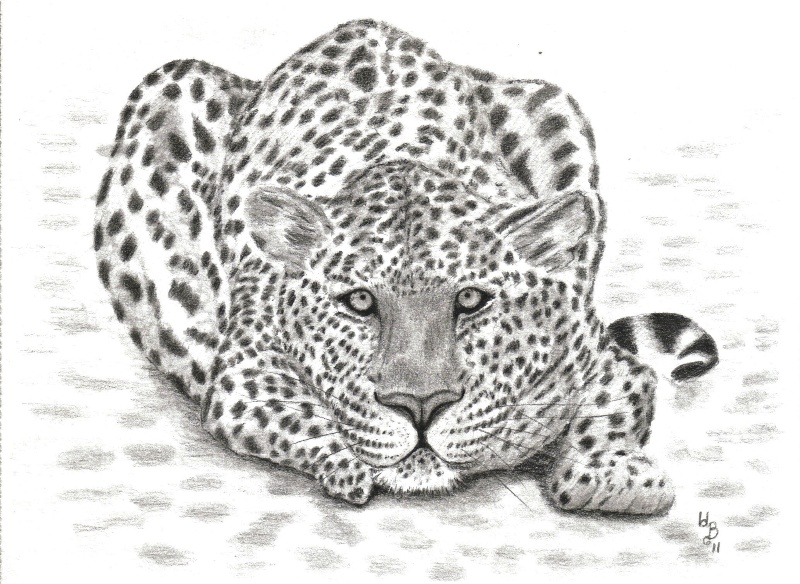 Simple Leopard Face Drawing