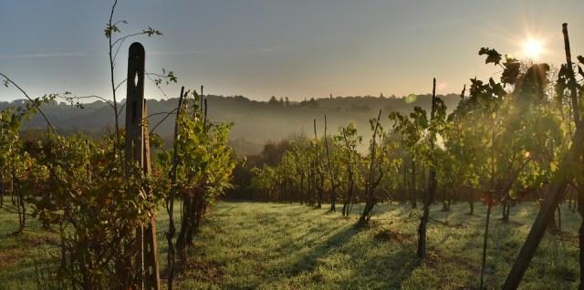 Pour faire du vin, il faut des vignes