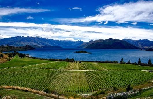 Sauvignon en Nouvelle Zélande