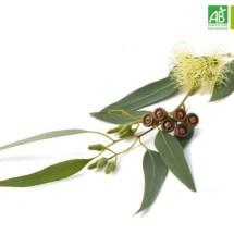 Huile Essentielle d'Eucalyptus radié bio (10 ml) - Abiessence