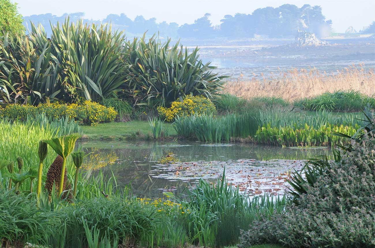LEtang aux Nympheas  Le Jardin du Pellinec en Bretagne