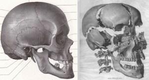 osteopathie-cranienne