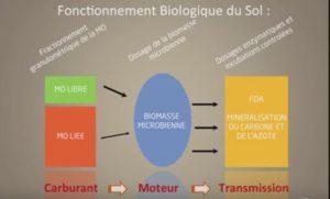 matière organique du sol (schéma)