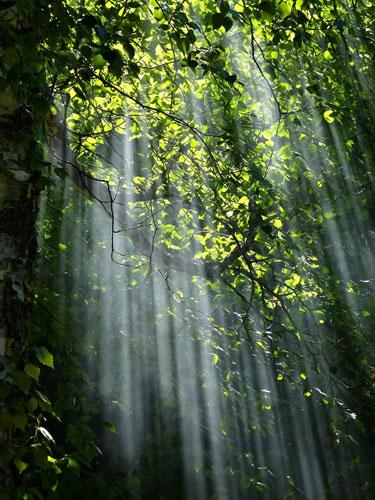 Les bienfaits de la nature sur le bien-être
