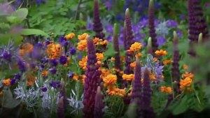 Un truc pour des massifs fleuris plus denses