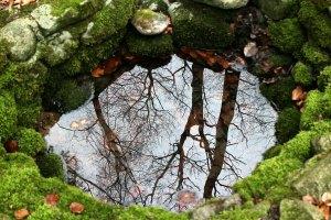 Read more about the article Comment avoir de l'eau douce pour les plantes