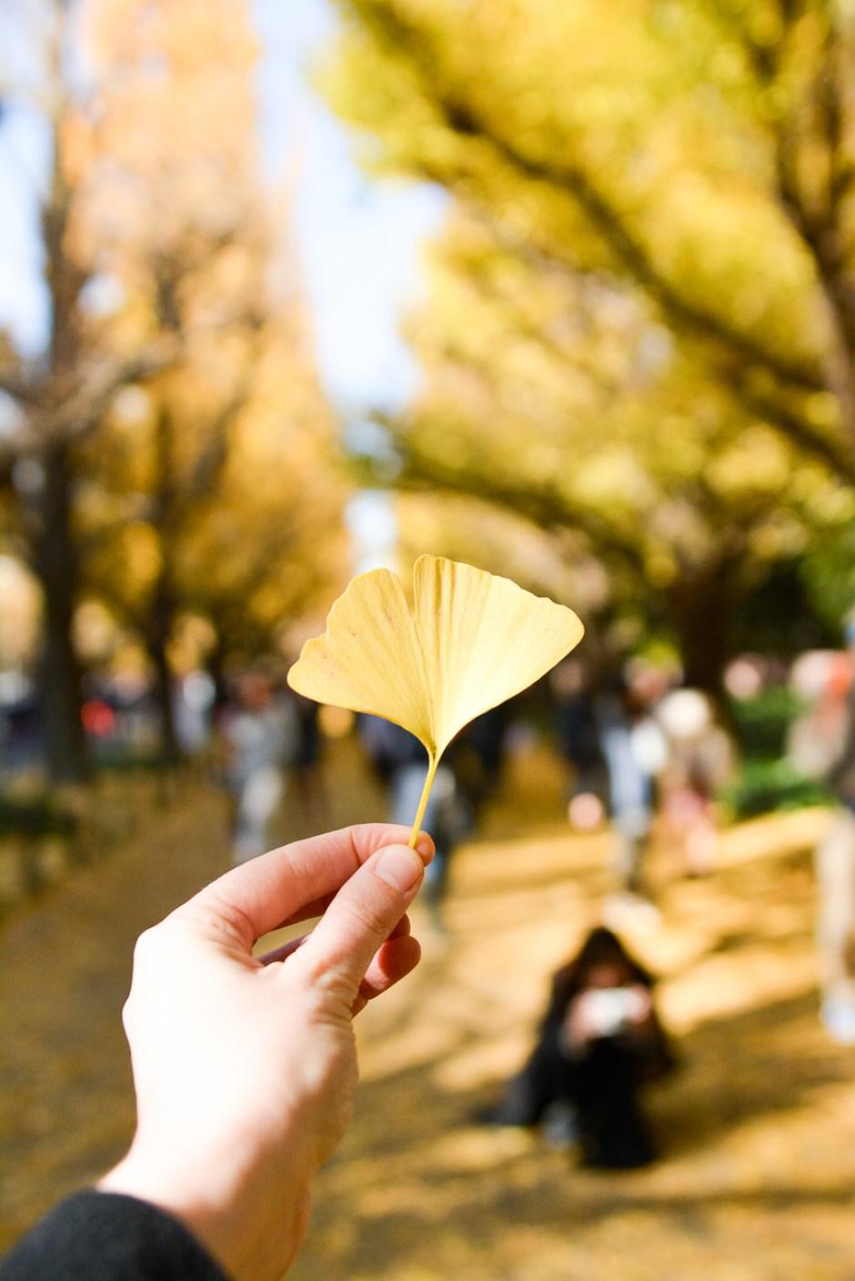 voyage japon tokyo spot automne momiji koyo