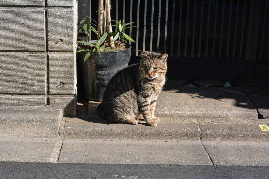 chat dans le quartier de Yanaka à Tokyo