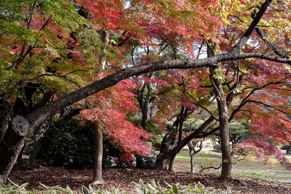 L'automne à Tokyo : le jardin Shinjuku Gyoen