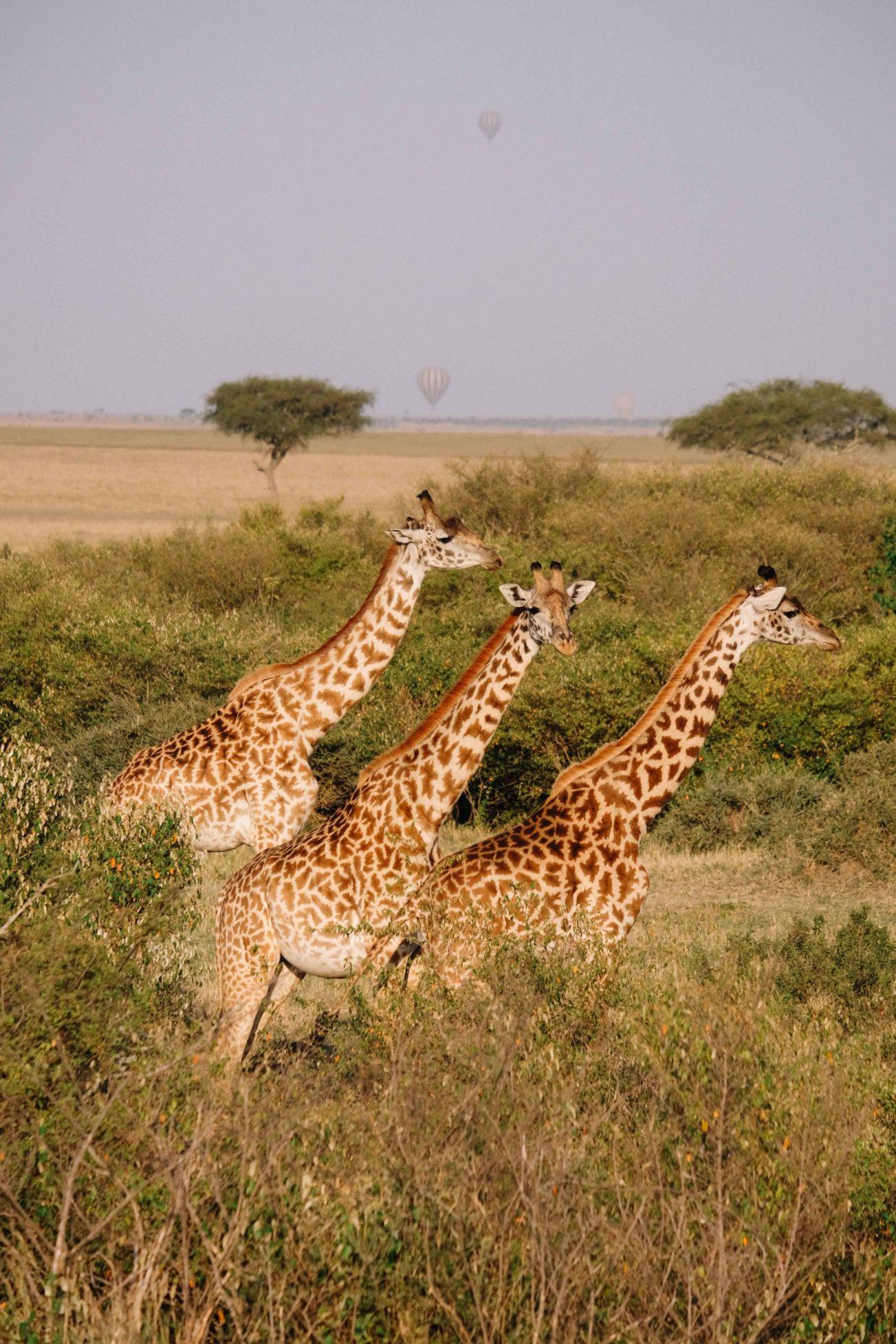 voyage au kenya, le masai mara