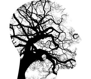 Cerveau neurones