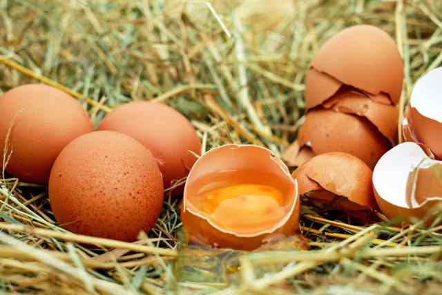 œufs bio