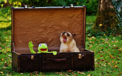 Kermit est sans stress pour préparer ses vacances...