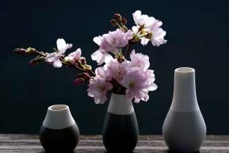 cherry-blossoms-4069596_1280