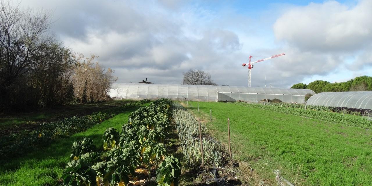 «Les légumes bio réduisent la pollution»