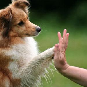 Why Useless Dog Tricks – Aren't!