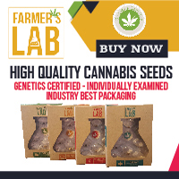 Get your cannabis seeds here.