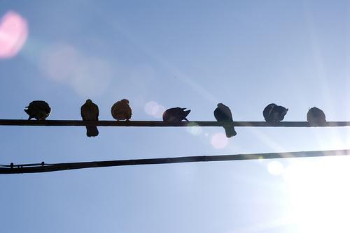 birds powerline photo