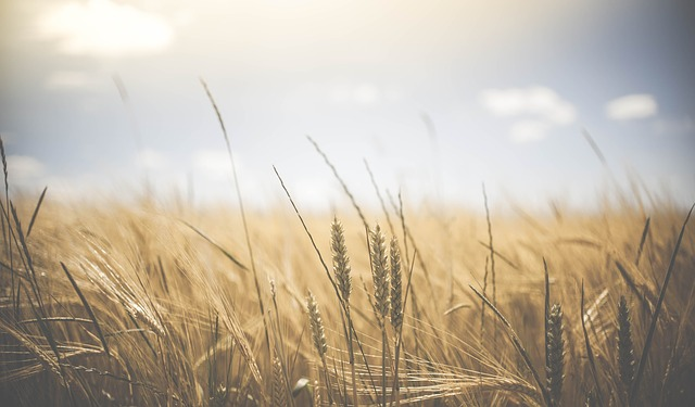 The Book of Ruth: 6 Biblical Principles of Servant Leadership