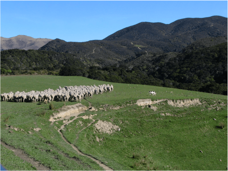 Sheep in the Bible - need a community