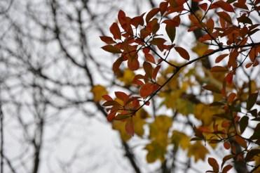 2016-10-31-autumns-dead-leaves-2