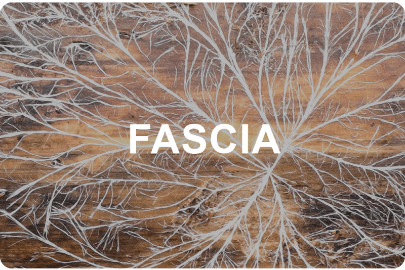 Whats the Big Deal with Fascia  Lead