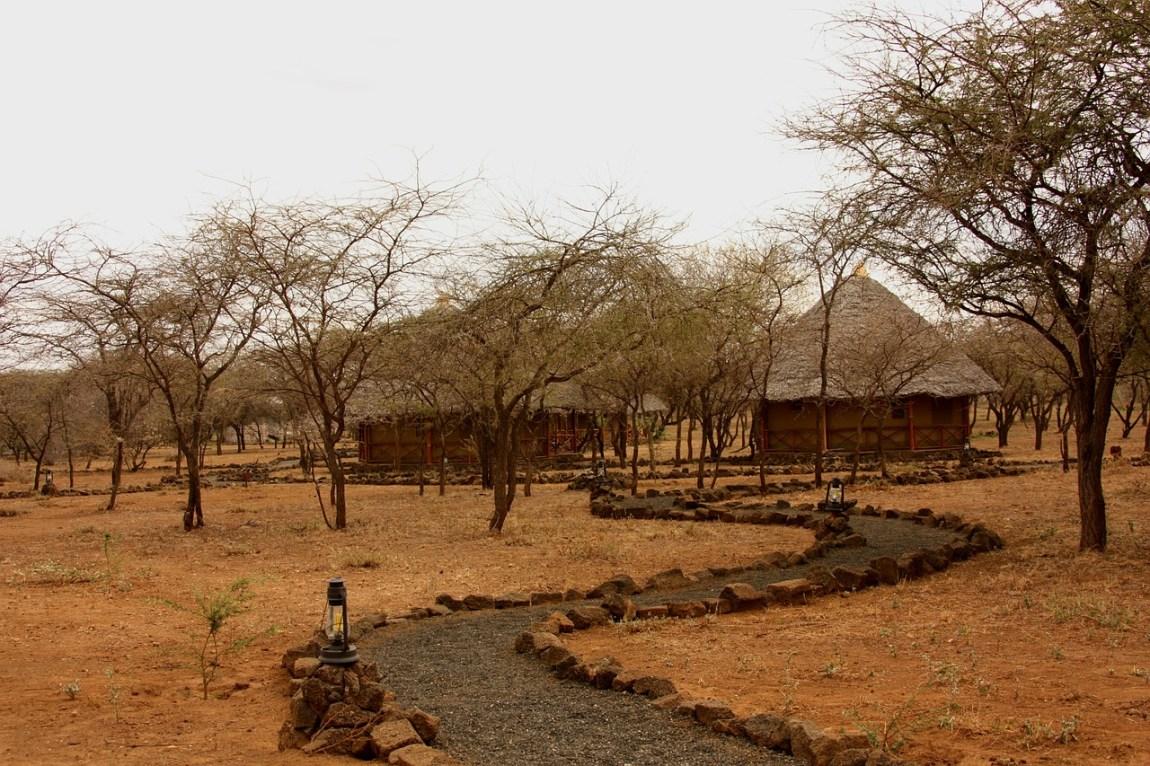Kenya Safari - Budget options