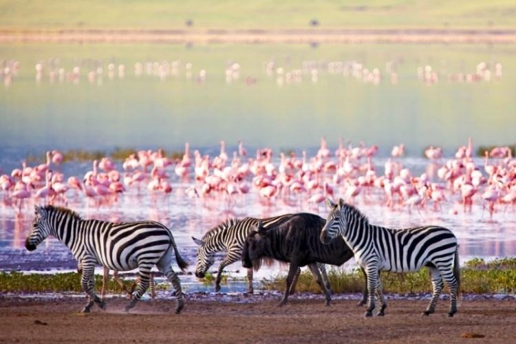 Ultimate safari adventure: lake manyara national park