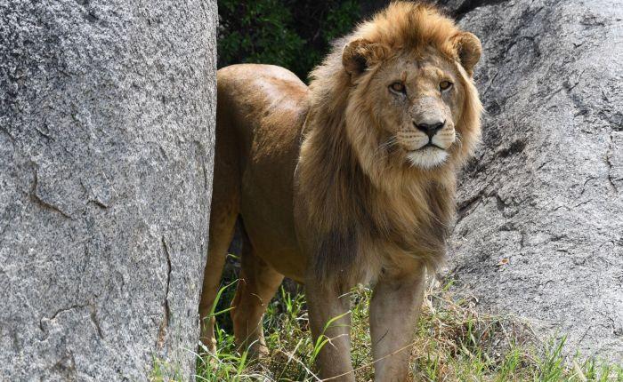 6 Days 5 Nights Best of Tanzania Big Five Safari