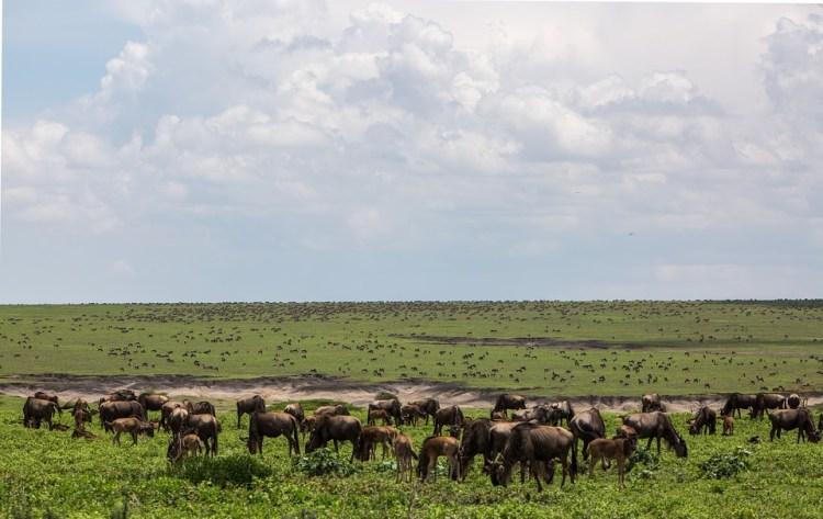 Ultimate safari adventure: Tanzania wildlife