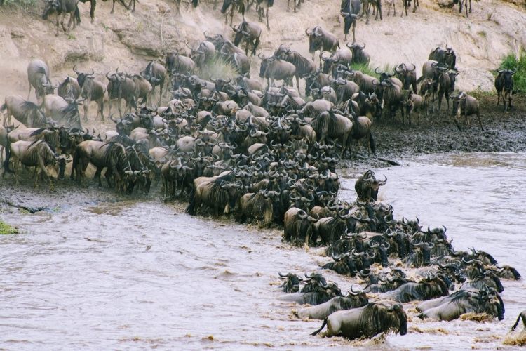 The Great Migration Tour - where to go
