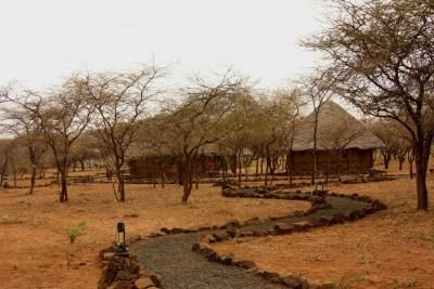 Kenya Safari Budget Options