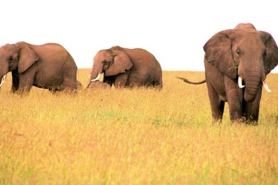 Kenya Safari Wild Experience