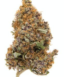 Purple Haze strain for sale